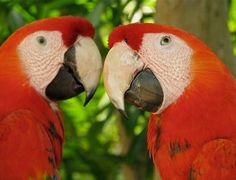 O parque ecológico Xcaret é um das atrações que merecem ser visitadas em uma viagem a Cancún. O local exibe fauna e flora diversificada e muitas paisagens naturais