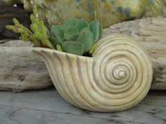 Items similar to Beach Decor Gift Mini Seashell Succulent Planter Ceramic Shell on Etsy Sea Snail, Snail Shell, Succulents In Containers, Cement, Container Gardening, Planter Pots, Shells, Gardens, Future