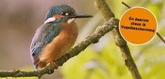 Vogelbescherming | Passie voor vogels