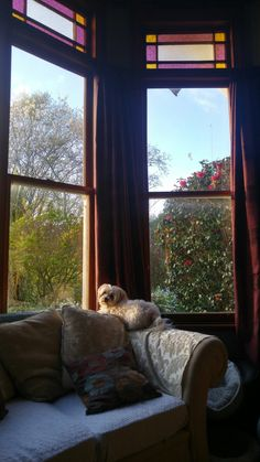 Olly 2016 My People, Windows, Animals, Animaux, Window, Animal, Animales, Ramen, Animais