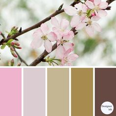 This week I decided to select a relaxing colour palette based on the cherry blossom flower for a current bedroom makeover. Looking at the soft colour palette of the pink and the richness of the branches a delicate and relaxing mood is required. Cherry Blossom Flowers, Blossom Trees, Blossoms, Colour Schemes, Color Combos, Relaxing Colors, My Home Design, Color Pallets, Nature Pictures