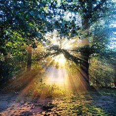 Image result for Sun Rays Through Trees