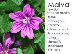 Il titolo dell'articolo è ambizioso, ma le proprietà curative ( in particolare antinfiammatorie e lassative) della malva, meritano di essere esaltate, perché questa pianta appartenente alla famiglia delle Malvacee, ha molteplici proprietà terapeut...