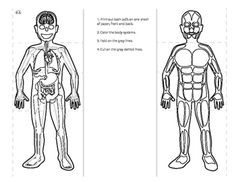 Human Anatomy Fold Book