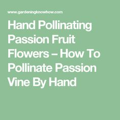 Hand Pollinating Passion Fruit Flowers – How To Pollinate Passion Vine By Hand