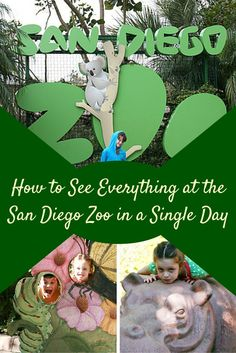 San Diego Zoo in a single day. Purchase tickets in advance!