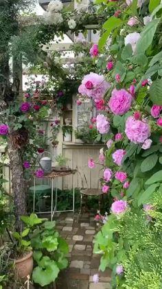 Dream Garden, Garden Art, Garden Cottage, Back Gardens, Outdoor Gardens, Beautiful Roses, Beautiful Gardens, Climbing Roses, Garden Planning