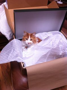 Give me a box.any box! Give It To Me, Cats, Box, Animals, Gatos, Snare Drum, Animales, Animaux, Animal
