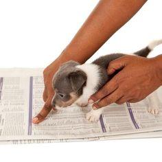 Cómo enseñar a un perro a ir al baño - ExpertoAnimal