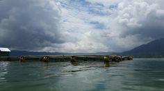 """@the lake Danau Batur on a boat to the """"Kuburan Terunyan"""" with the Taru Menyan Tree. The tree is 1100 years old."""