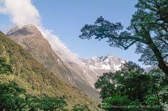 Highway_Milford_Sound_Neuseeland-erleben-info_07