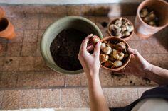 Blumenzwiebeln pflanzen Gardening, Archetypes, Stuffed Mushrooms, Vegetables, Planting Shrubs, Ground Cover Plants, Shade Perennials, Planting Bulbs