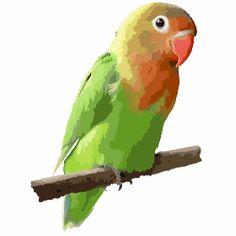 bunter Papagei - Ein kleiner bunter Papagei auf einer Stange.