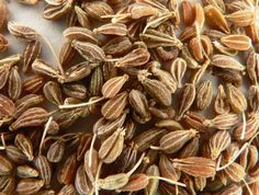 Aniseed Essential Oil Pimpinella anisum Aniseed has a sweet, licorice-like aroma, which is a popular culinary staple in India and Turkey. Aniseed is Caraway Seeds, Fennel Seeds, Herb Seeds, Coriander Seeds, Digestion Difficile, Anise Oil, Italian Spices, Italian Foods, Italian Recipes