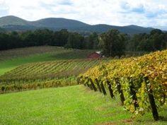 Dahlonega to hike and wine taste