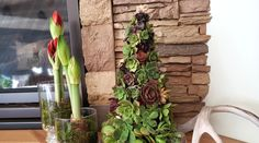 Love creating succulent crafts? Then you'll LOVE making these succulent Christmas Trees! They do take a bit of time and a LOT of succulents, but it's so worth it! I was able to get a lot of succulent pups from my own backyard, so the … Succulent Tree, Succulent Planter Diy, Diy Planters, Succulents, How To Make Christmas Tree, Christmas Trees, Holiday Crafts, Centerpieces, Backyard