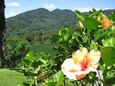 Boquete landscape