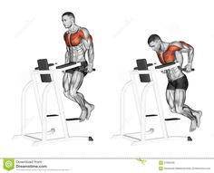 exercising-dips-simulator-bodybuilding-target-muscles-marked-red-initial-final-steps-57065346.jpg (1300×1057)