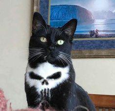 We named him Frank - Cats - Katzen Animal Jokes, Funny Animal Memes, Cute Funny Animals, Funny Animal Pictures, Cute Baby Animals, Cat Memes, Animals And Pets, Funny Cats, Funny Memes