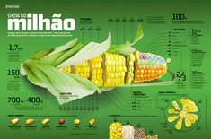 Best Infographics | corn stats A Showcase of Some Of The Best Infographic Designs