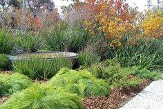 Image result for gordon ford the natural australian garden