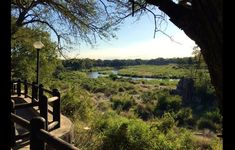 Kruger National Park Safaris ✅ Best Packages and Rates Since 1998 ✅ Kruger National Park Safari, National Parks, Wildlife Safari, Vineyard, Holidays, Outdoor, Vacations, Holidays Events, Outdoors