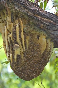 """bee hives. we have gotten several of these """"Utah Hives"""" before. VERY interesting to see in the """"wild"""""""