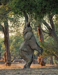 Elephants of Mana Pools by Morkel Erasmus.
