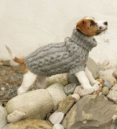 Because every dog needs a sweater
