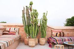 Cactus terrace