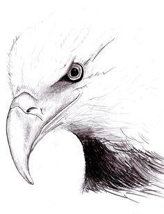 221 best Eagle sketches images on Pinterest in 2018 | Eagle drawing ...