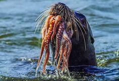 Raw Squid Molokai Hawaii