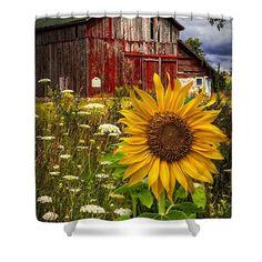 Barn Meadow Flowers Shower Curtain by Debra and Dave Vanderlaan