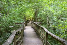 IMGP0803 by Duane Burdick, via Flickr #boardwalk #forest