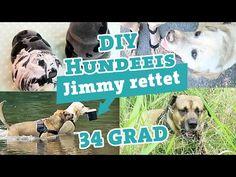 Dummytraining Hund   3 Übungen Hundebeschäftigung   Dummy apportieren Labrador Hundekanal - YouTube