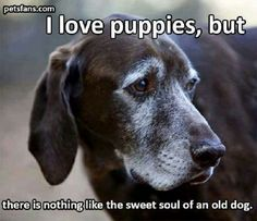 Consider Adopting a Senior Rescue Dog or Cat at your Local Animal Shelters ♥️