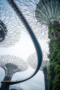 Garden By The Bay Award singapore's gardensthe bay is a must see for the