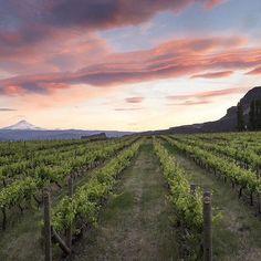 Photo of the Napa Valley sunset. #Napa #napavalley #napacounty #countyofnapa #cityofnapa #visitnapavalley #California #Cali #WeloveCalifornia #VisitCalifornia #CA #US #USA #UnitedStatesofAmerica #UnitedStates #America #NorthAmerica #travel #winery #wine #winecountry #CaliforniaWineCountry by hchan03