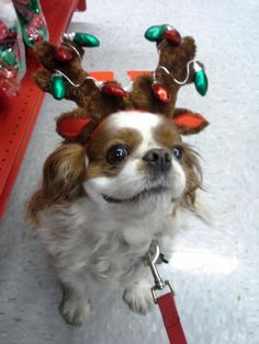 She likes to smile when she's a reindeer
