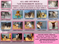 ALL ARE OFF HOLD  7AM TOMORROW~04/03/14  WITHOUT PREPAID ADOPTION OR RESCUE TAG THEY CAN BE EUTHANIZED AT THAT TIME!!!!  PLEASE SHARE/FOSTER/DONATE/ADOPT!!
