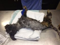Dying Dog Thrown In Garbage Is Unrecognizable Now