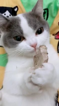 yummy yummy 😋 Watching it eat also feel good happiness! - Cats ❤️ - Katzen Cute Cats And Kittens, I Love Cats, Crazy Cats, Kittens Cutest, Cute Funny Animals, Cute Baby Animals, Funny Cats, Cute Animal Videos, Funny Animal Pictures