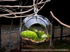 Hanging Glass Globe DIY Moss Terrarium Kit-Live Assorted Moss Lichens & Glass ball included-Wedding Decor. $29.95, via Etsy.