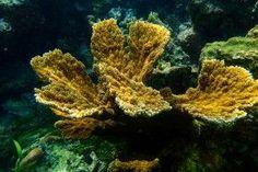 Los corales desaparecen, ¿cómo nos afecta? http://www.consumer.es/web/es/medio_ambiente/naturaleza/2014/06/19/220081.php