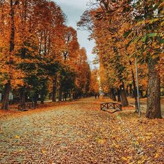 by Inside Cluj - Discover the city like a local Like A Local, Romania, Vineyard, Told You So, Country Roads, Autumn, Mai, City, Instagram Posts