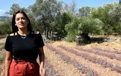 Φυσική καλλιέργεια - Βότανα και Υγεία: Καλλιέργεια αρωματικών : Νομίζετε ότι δέν γίνεται ...