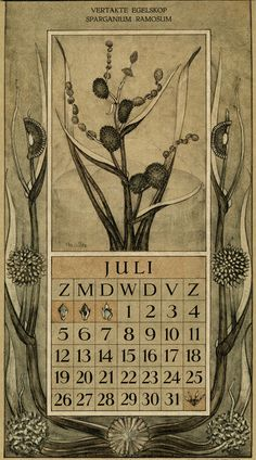 Le Roy, Charles, illustrator. July. Botanische kalender (Dutch botanical calendar). 1925.