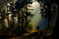 Morning in Kanha... by Amod Sane on 500px