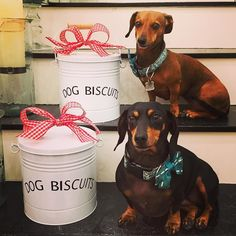 Lucy & Roxy don't want you to forget Christmas gifts for your furry friends! Their gift pick today are these adorable treat tins preferably filled with their favorite biscuits! $24. To purchase comment sold with your email and state we're shipping to. #tfssi #stsimons #seaisland #Christmas2015 #lucyandroxy #tfgirlsfavoritethings