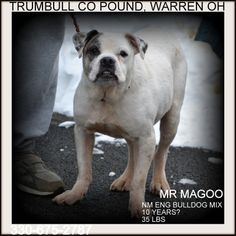 URGENT!!! MAGOO....RESCUE NEEDED ASAP!!! WARREN OHIO>>>>Mr Magoo was found lost/stray in Warren OH.  He is possibly 10 to 12 years old, and weighs only 34 lbs.  Available 3.8.14.***Must be 18 years of age or older to adopt***